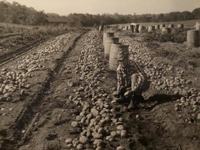 Photo, B&W, of Emil Mulnite in a potato field
