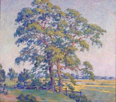 Pepperidge Trees