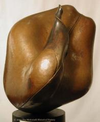 Pea (Germinating Form);Pea (Germinating Form)