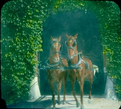 Annie B. Jennings' Horses