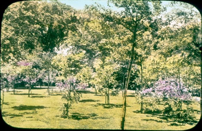 Trees and Lilacs
