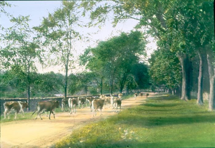 Bronson Herd