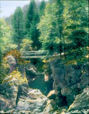 Tree Bridge from the North