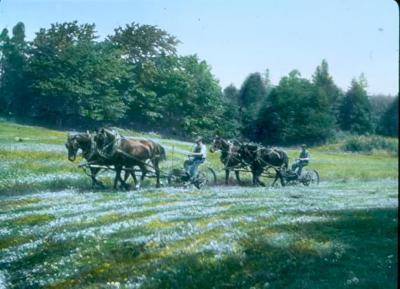 DeWitt Hay Field