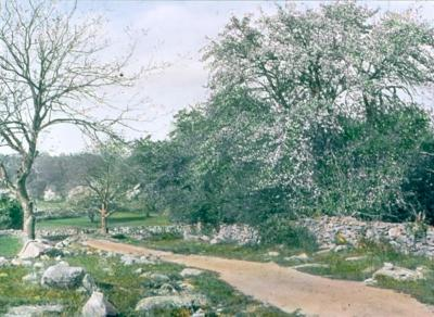 Old Orchard Near Osborn Hill