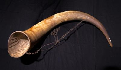 Bull's horn